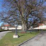 13 Baum Schlosspark Altshausen