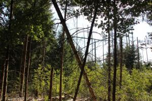 Bäume im Brunnenholzried Bad Waldsee