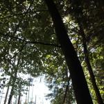 Bäume im Naturschutzgebiet Brunnenholzried