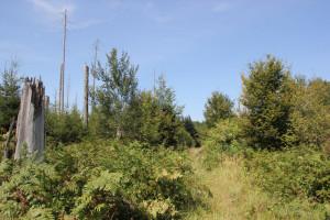 Natur im Brunnenholzried Bad Waldsee