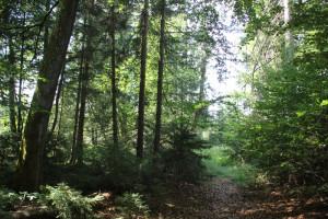 Pfad druchs Brunnenholzried