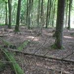 Tote Bäume im Brunnenholzried