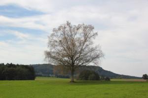 Umgebung Guggenhausen Ried Gebiet