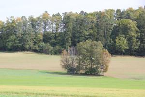 Umgebung Guggenhausen Wald