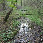 Umgebung Guggenhauser Weiher Zufluss