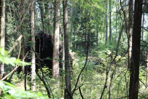 Ungestürzter Baum Brunnenholzried