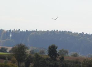 Vögel über Guggenhauser Weiher