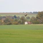 Vögel Guggenhauser Ried