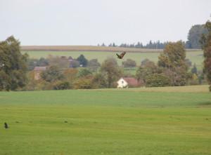 Vögel-Guggenhauser-Ried