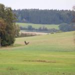 Vögel Umgebung Guggenhausen Landschaft