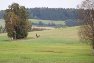 Vögel-Umgebung-Guggenhausen-Landschaft