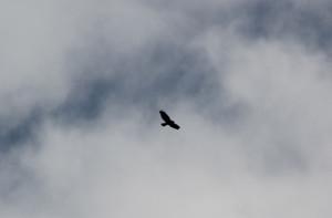 Vögel am Himmel Guggenhauser Ried