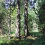 Wald Brunnenholzried Oberschwaben