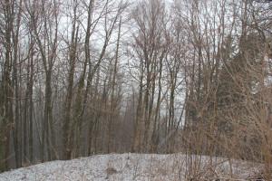 Wald-um-die-ehemalige-Burg-Königseggwald