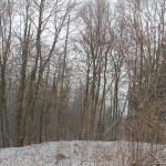 Wald um die ehemalige Burg Königseggwald