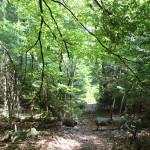 Weg durchs Brunnenholzried