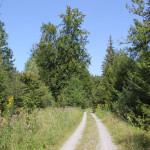 Weg um Brunnenholzried