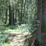 Wegweiser Wanderweg durchs Ried