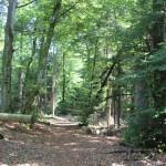 Zersägte Bäume Wegzeichen