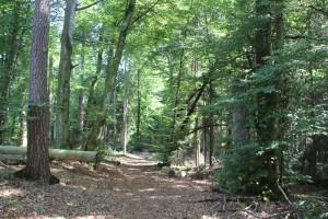 Zersägte-Bäume-Wegzeichen