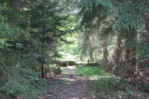 Zersägte Bäume zeigen Weg durchs Brunnenholzried