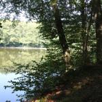 Ufer Elfenweiher Oberschwaben