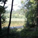 Vegetation Elfenweiher Oberschwaben