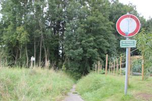 03-Pfad-in-Altdorfer-Wald-von-Steige-Höll
