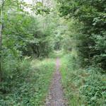 13-Pfad-durch-Wald-Höll