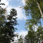 26-Baumspitzen-Höll-Oberschwaben