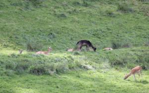 Wild im Wildgehege Wolfegg