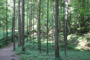 Weg zum Wasserfall Schmalegger Rinkenburger Tobel
