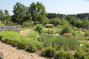52 Kräutergarten Höchsten