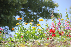 53 Blumen am Wegesrand