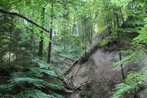 Bannwald-Schmalegger-Rinkenburger-Tobel