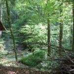 Buttenmühlebach-Schmalegger-Rinkenburger-Tobel