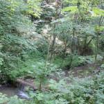 Weg-des-Buttenmühlebach