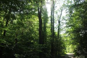 Weg-im-Buttenmühlebach-Schmalegger-Rinkenburger-Tobel