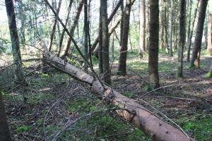 Bannwald Ummendorfer Ried