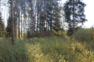 Feuchtwiesen Ummendorfer Ried