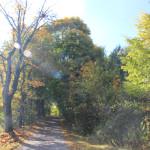 Herbstbilder Ummendorf