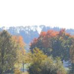 Herbstimpression Ummendorfer Ried
