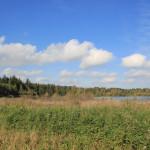 Natursee Wald Ummendorfer Ried