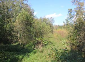 Urwald Ummendorfer Ried