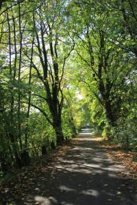 Waldweg ums Ummendorfer Ried