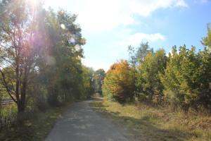 Wanderweg um Ummendorfer Ried