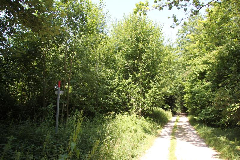 Feldweg zum Hohmichele