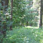 Grabhügel-nahe-Vierecksschanze-Aßmannshardt