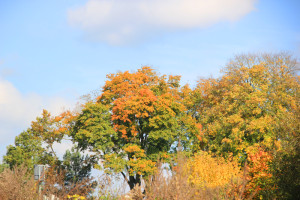 Herbstbäume-im-Ummendorfer-Ried