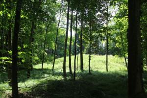 Hohmichele vom Wald gesehen